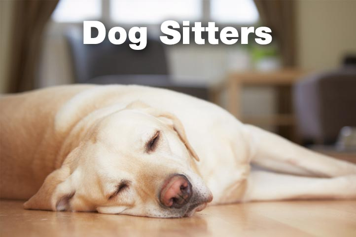 Essex Dogs - dog sitters in Essex