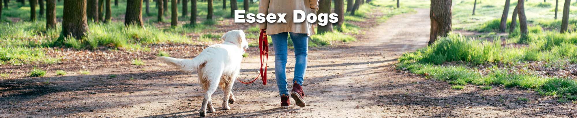 Essex Dogs - for all things dog in Essex