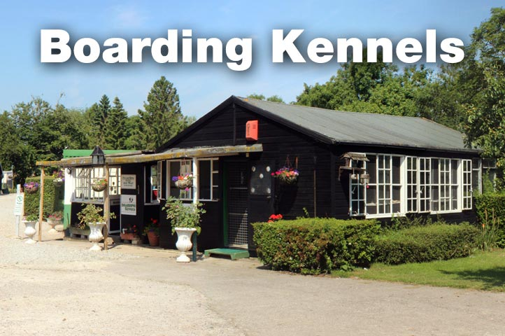 Essex Dogs - boarding kennels in Essex