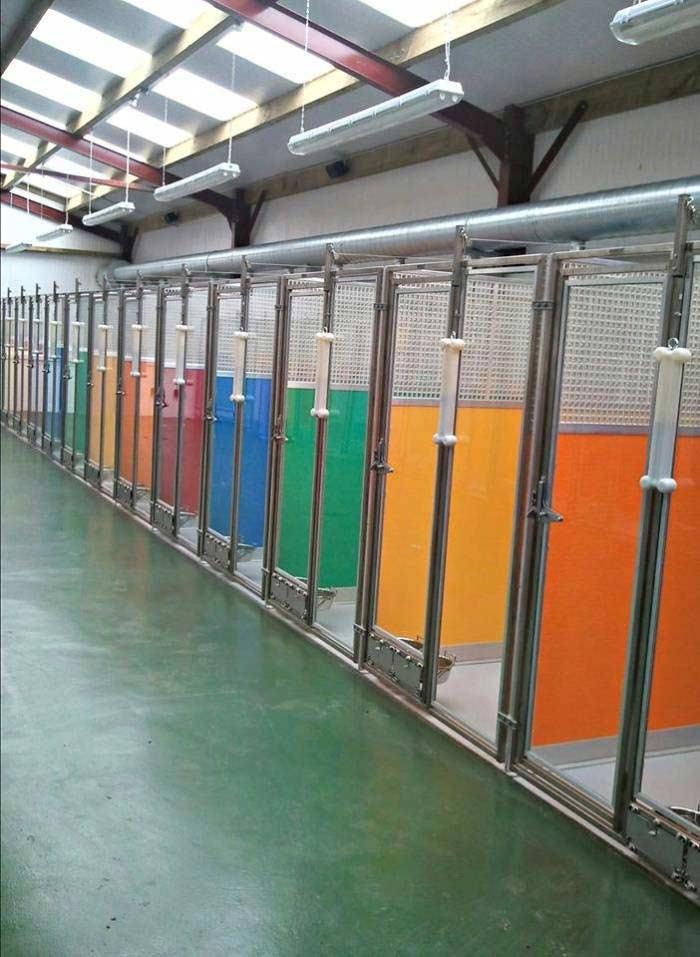 Essex Dogs - choosing a boarding kennels