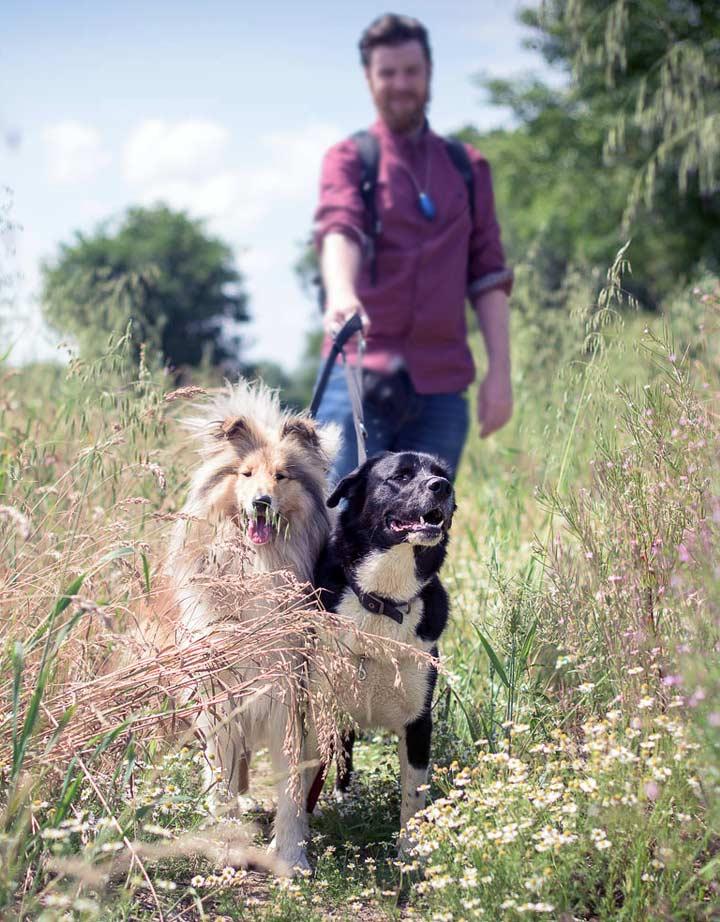 Essex Dogs - Choosing a dog walker