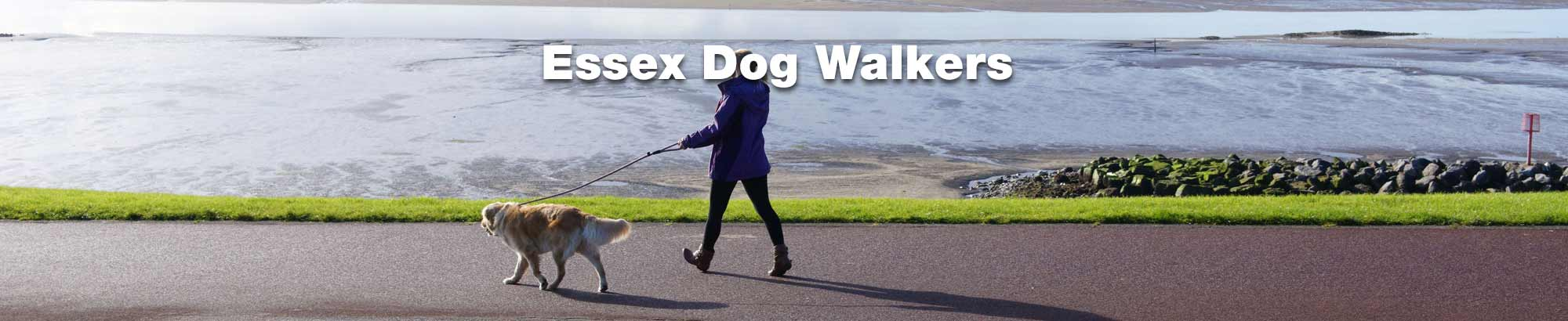 Find a professional dog walker in Essex