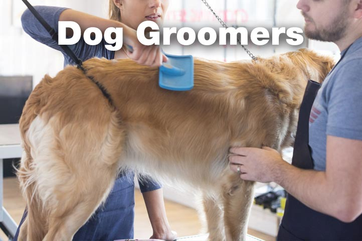 Essex Dogs - dog groomers in Essex