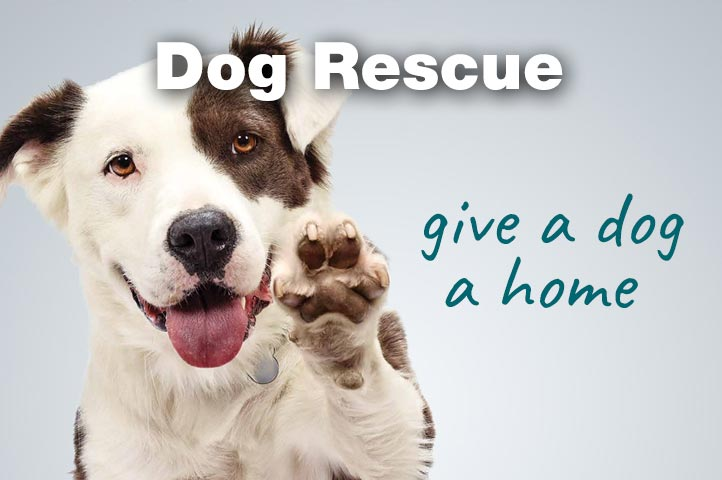 Essex Dogs - dog rescue groups in Essex