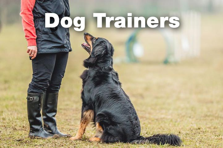 Essex Dogs - dog trainers in Essex