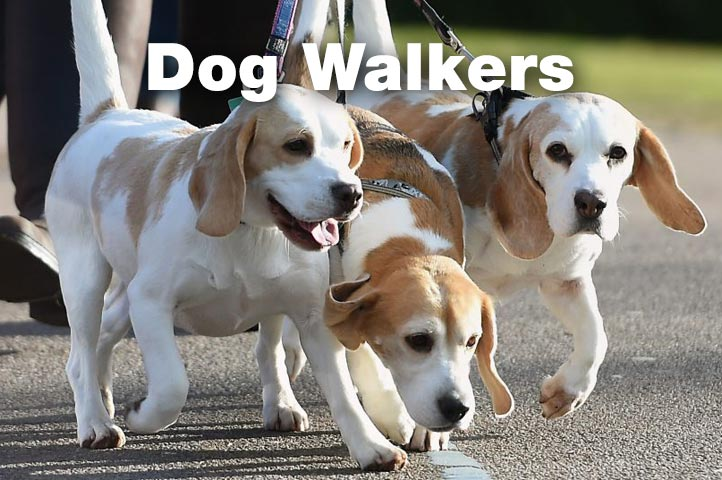 Essex Dogs - dog walkers in Essex